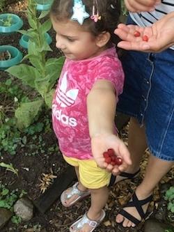 Beeren sammeln